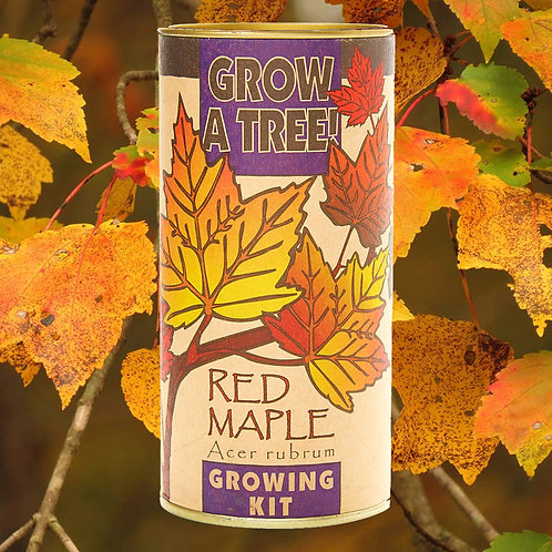 Red Maple Growing Kit