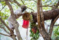 Zambeezi_Social_June-51.jpg