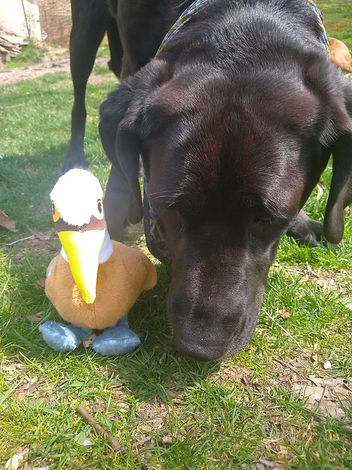 Clean Earth Pelican Dog Toy