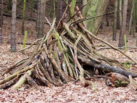 Forest School as a mindset... as well as a set of activities