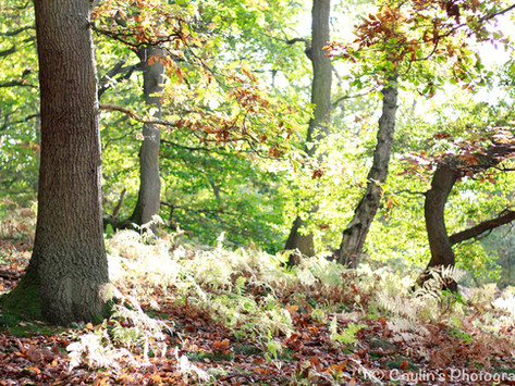 Why trees? What do woodlands do for children's play?