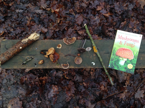 How Forest School Leaders are different from Teachers...