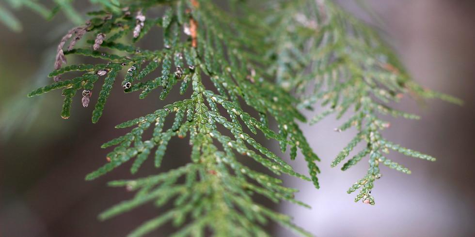 Webinar - Eastern Region Association of Forest & Nature Schools