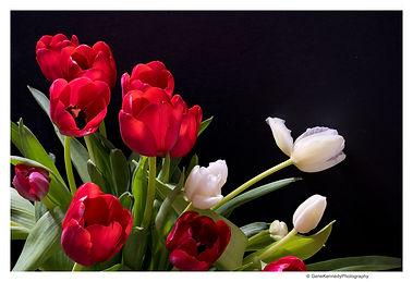 Valentine Tulips #2.jpg