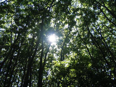 Blean Woods, Canterbury.JPG