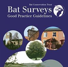 Bat Surveys, Bat Activity Surveys