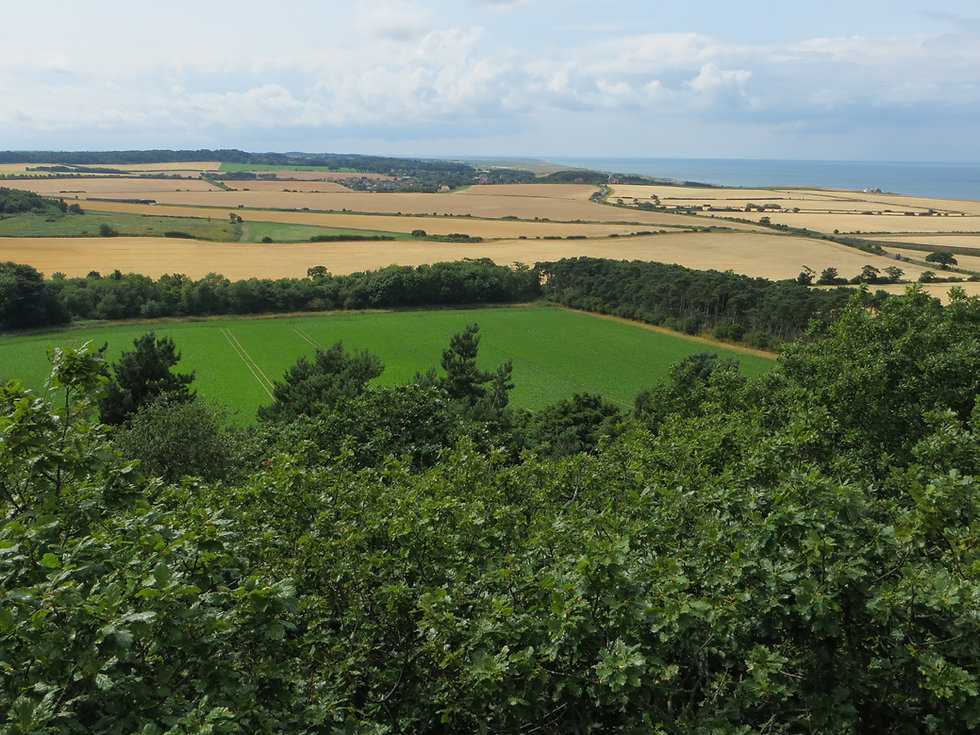Habitat Surveys, Norfolk