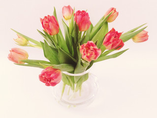 FLOWER FRIDAY ~ TULIPA (Tulips)