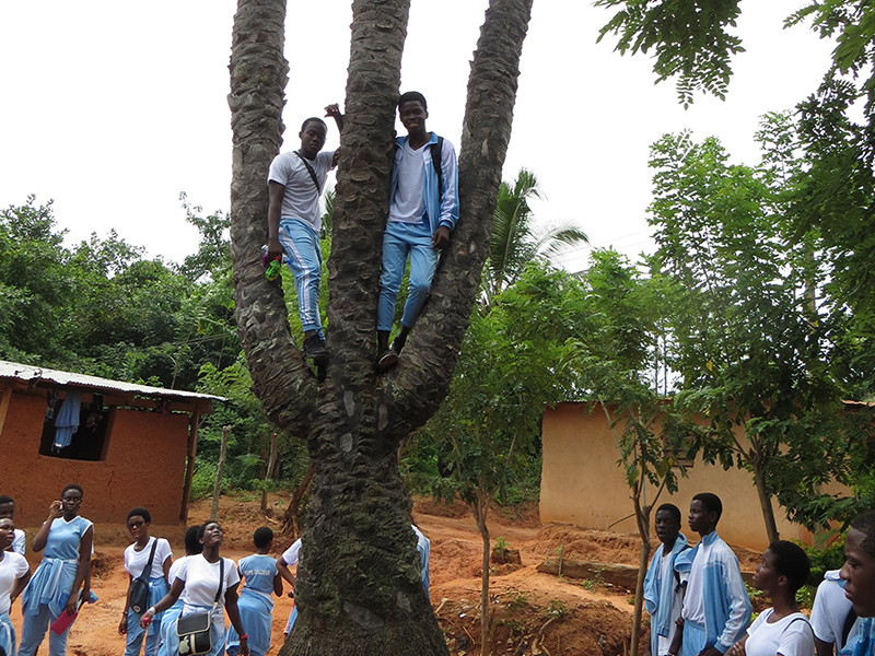 Students Admire Three-Stemmed Palm Tree