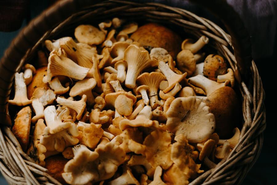 A basket of assorted mushrooms