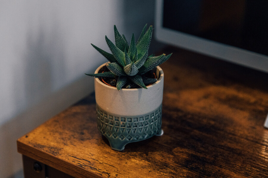 An aloe plant on a wooden desk