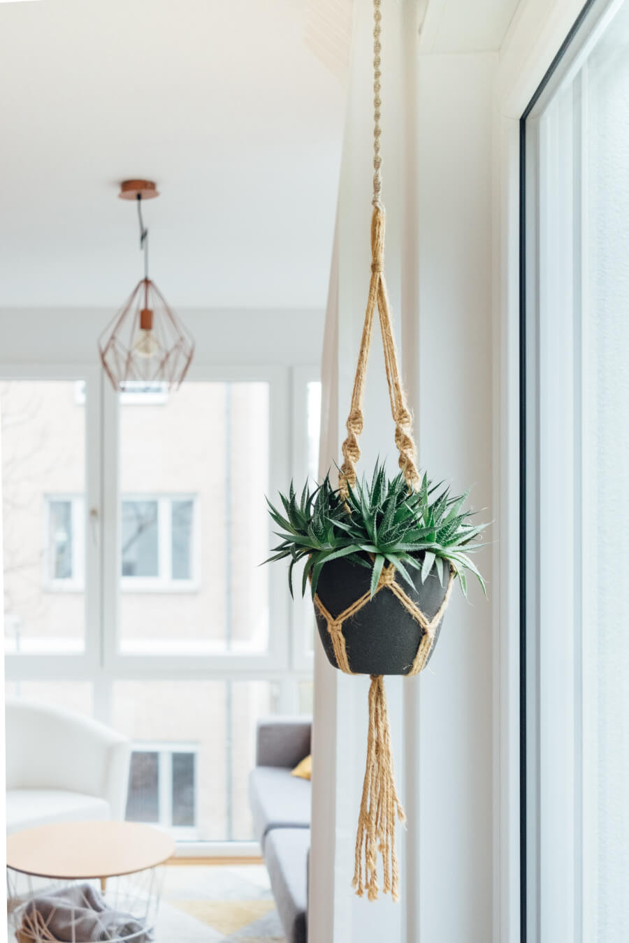 A potted plant hanging from the ceiling with a rope plant hanger