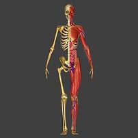 sciatica, numbness, stinger, burning, all health chiropractic