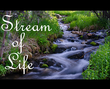 STREAM OF LIFE LOGO.png
