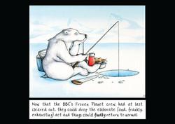 Polar Bear pursuits