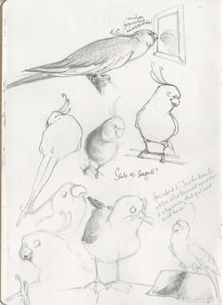 Seagulls_sketchbook.jpg