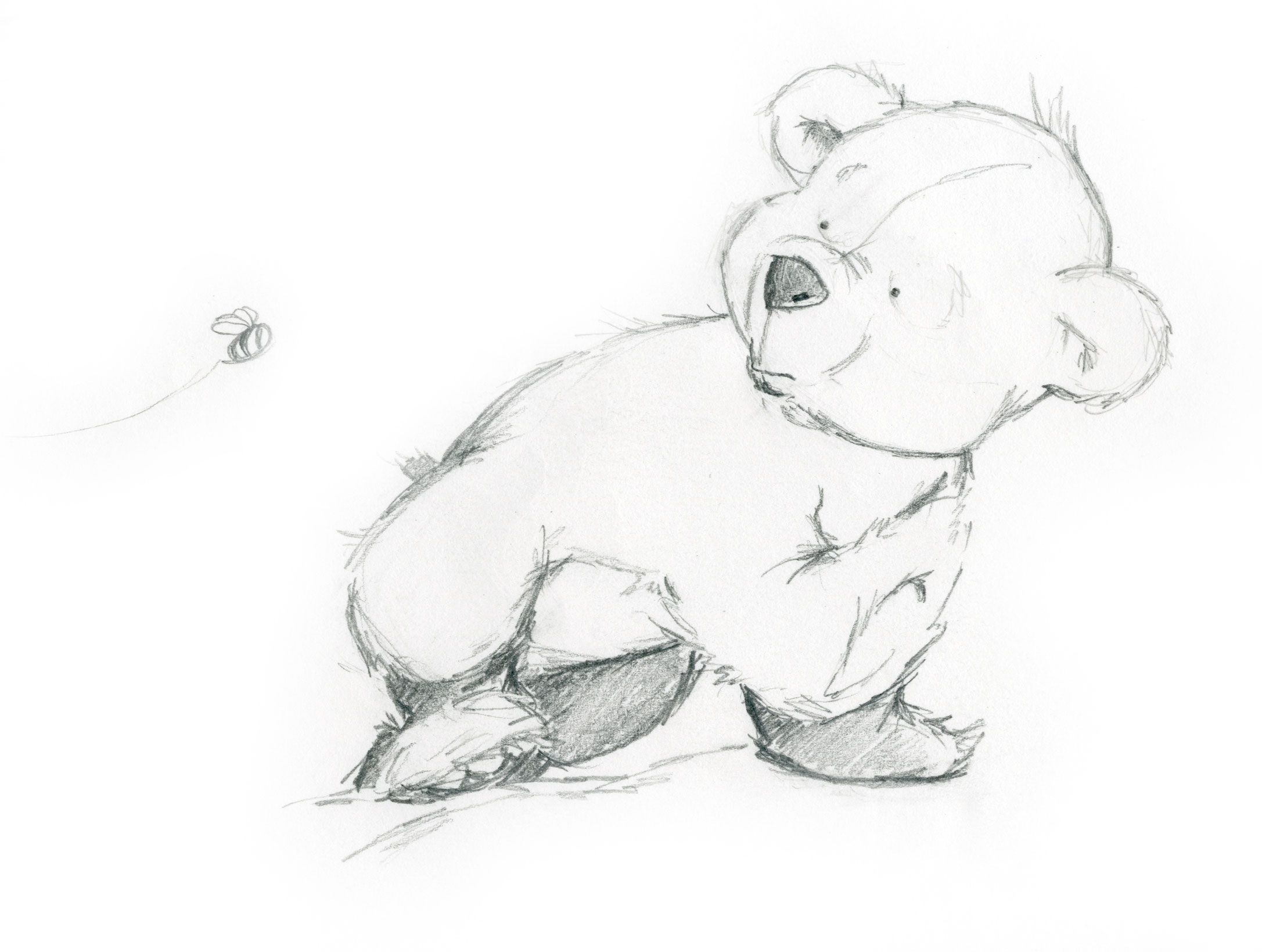 curious bear sketch