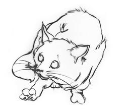 cat_b&w.jpg