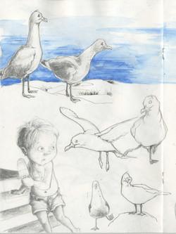 seagulls-4.jpg