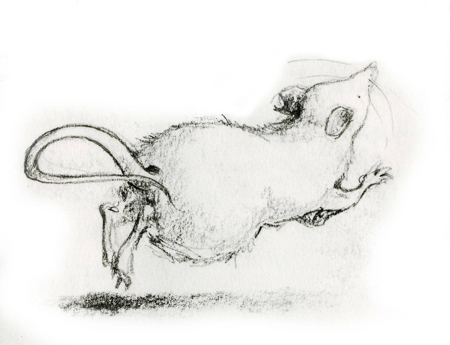 Early mouse character sketch