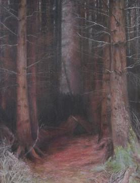 Abriachan Forest Invernesshire_