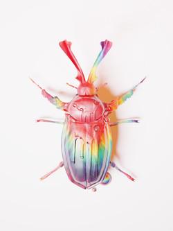 escarabajo hipiie5 cogpia
