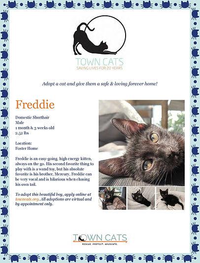Freddie_edited.jpg