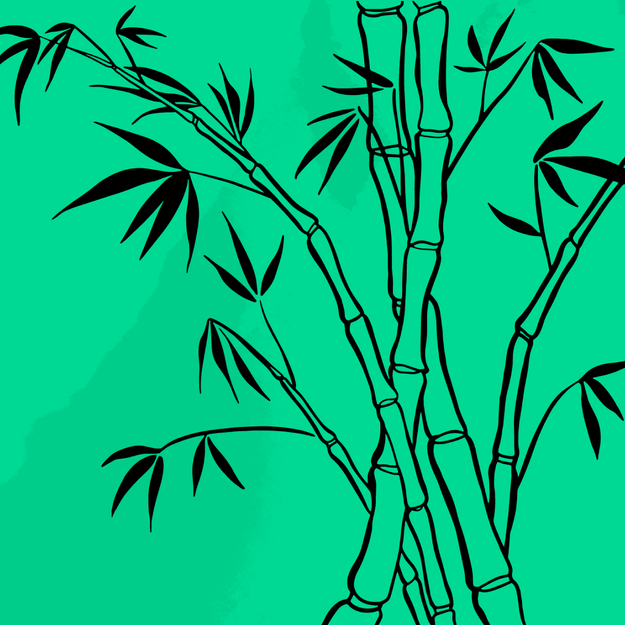 icon-bambu-instagram.png