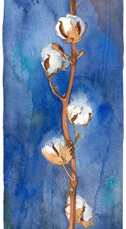 Cotton branch.jpg