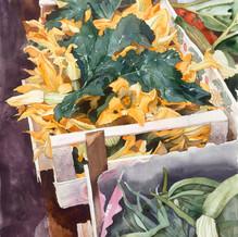 Flowering Courgettes.jpg