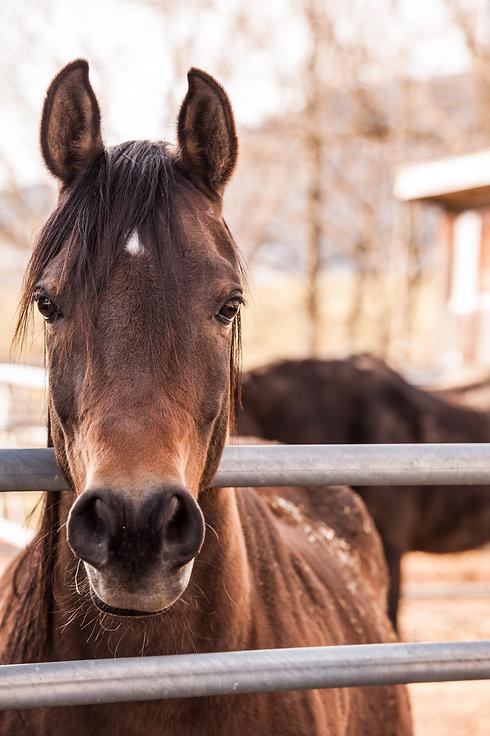 animal-animal-photography-horse-53114.jp
