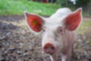 animal-animal-photography-macro-110820.j