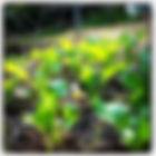 green garden plants in greenhouse