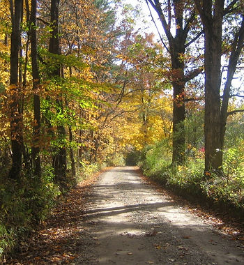 narrow country road in fall