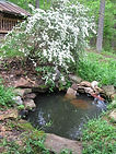small pond and flowers