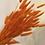 Thumbnail: Bunny Tails