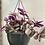 Thumbnail: Tradescantia Nanouk Hanging Pot