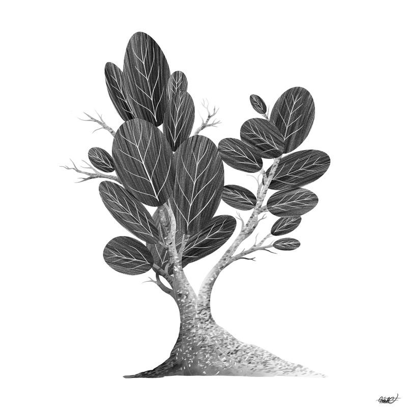 arbre_carré_2.jpeg