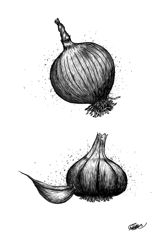 Esquisse Ail et Oignon.jpg