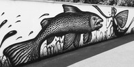 BROWN TROUTS WALL