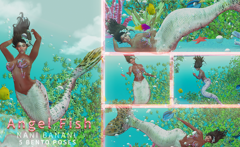 angelfish - large2.png