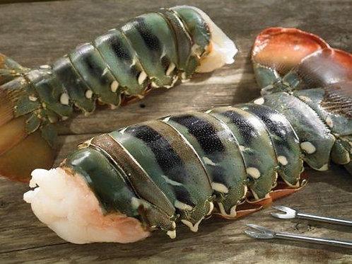 Australian Lobster Tail Jumbo(20-24 oz)
