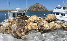Blue_Point_Oysters.jpg