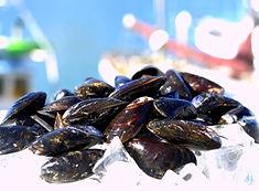 Mussels_Black (1).jpg