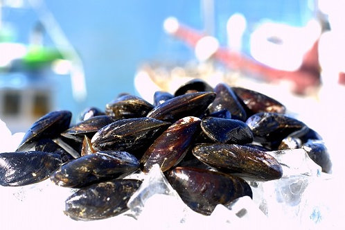Live Black Mussels