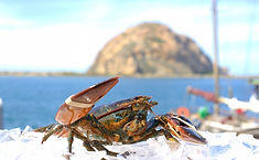 Lobster_Live_Maine.jpg