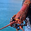 Thumbnail: Live California Spiny  Lobster - Live