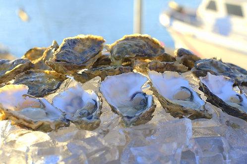 Grassy Bar Oysters (3 Dozen Bag)