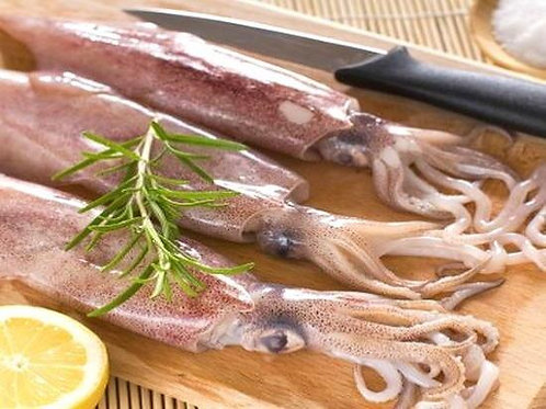 Squid (Fresh Whole)