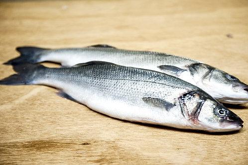 Bronzini (Mediterranean Sea Bass)